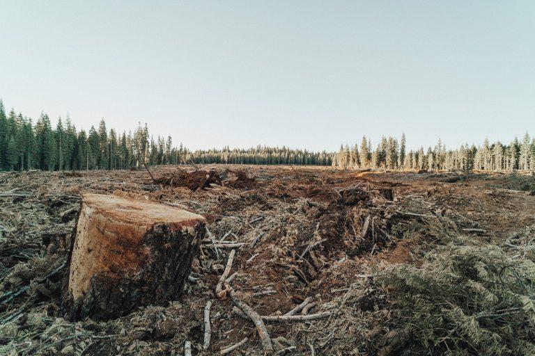 deforestation-image-1
